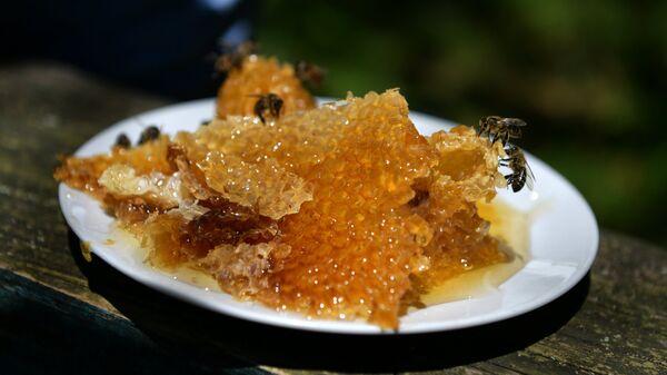 Медовые соты на пасеке в ущелье реки Бзыбь в Абхазии