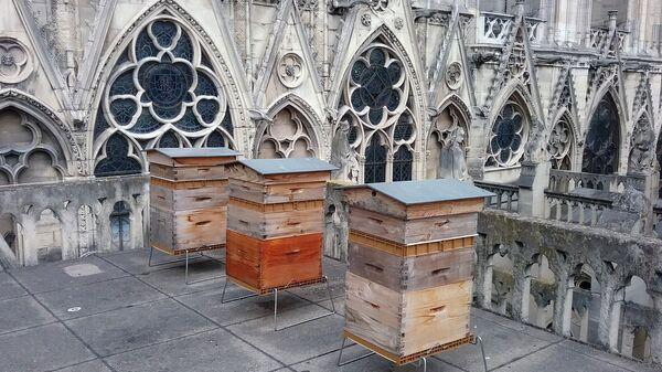 """""""Пчелы умирают, но не сдаются"""": Успенский пост начинается с меда"""