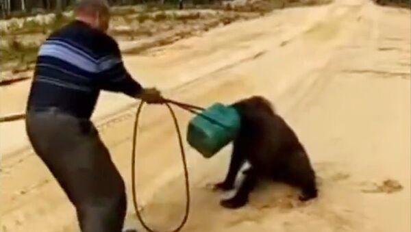 Медведь, застрявший головой в канистре