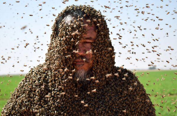 Зухаир Фатани с пчелами. 11 сентября 2018