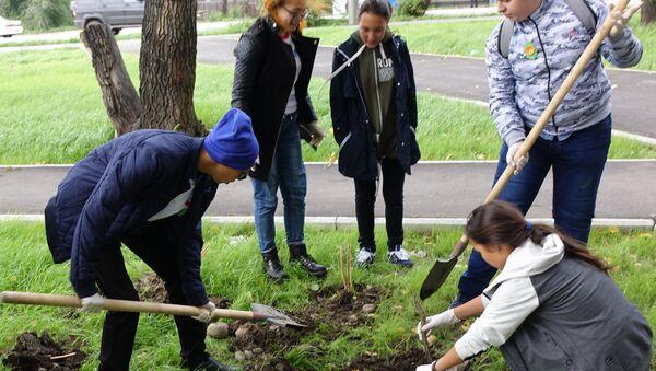 Волонтеры заповедника Хакасский высадили цветы в Абакане