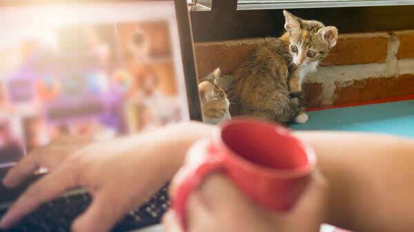 Котенок возле ноутбука. Архивное фото