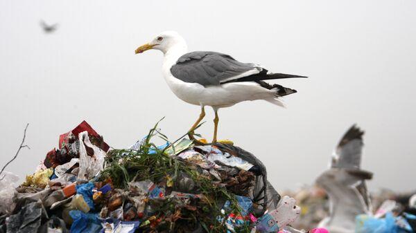 Полигон по утилизации твердых бытовых отходов