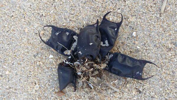 Яйца ската на пляже американского штата Северная Каролина