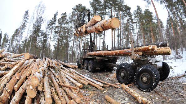 Заготовка древесины. Архивное фото