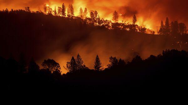 Ученые предложили новый способ прогнозирования лесных пожаров