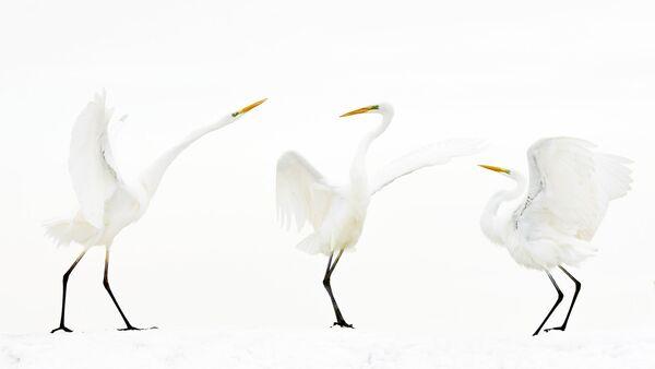 Работа победителя конкурса Nature Photographer of The Year 2018. Bence Maté