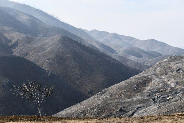 Последствия лесных пожаров в окрестностях города Малибу в штате Калифорния