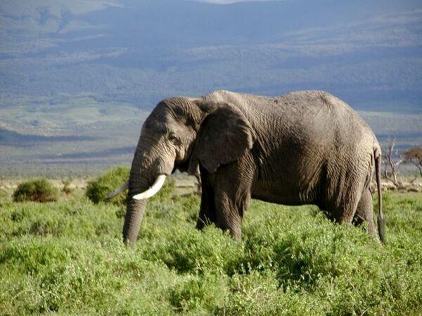 Слоны в новых условиях не сразу заводят новые знакомства - ученые