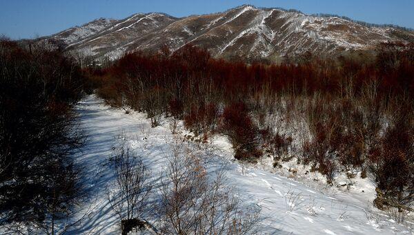 В 10 лесничествах Приморья запретили рубку дальневосточной липы