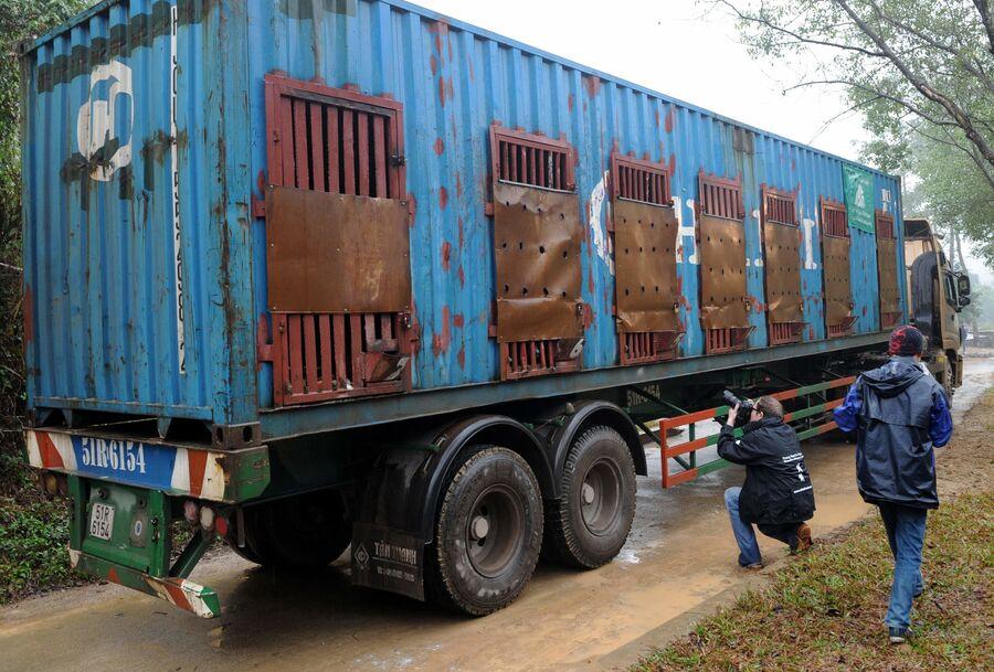 Сотрудник Фонда Животные Азии фотографирует спасенных с желчегонной фермы во Вьетнаме медведей