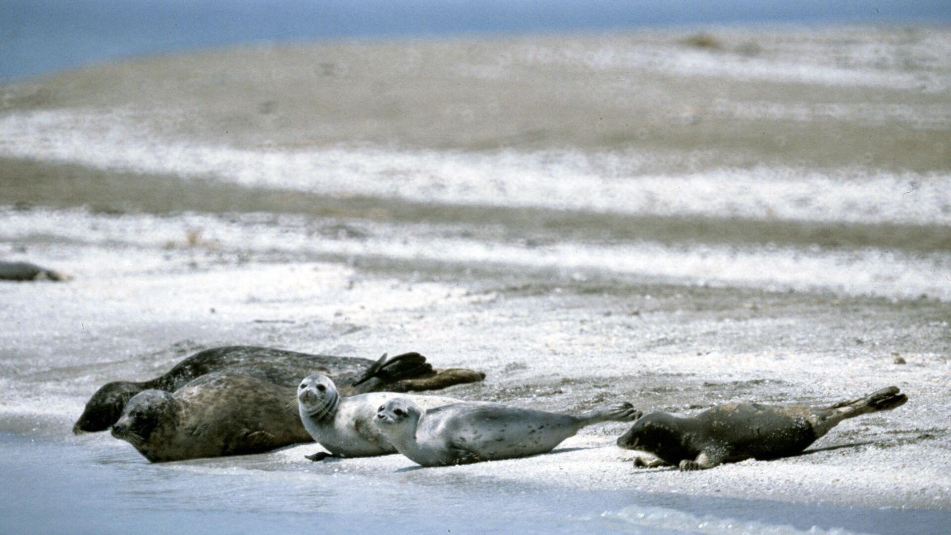 На побережье Каспийского моря нашли 17 мертвых тюленей
