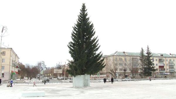 Шок под корешок. Главную новогоднюю ель в Чебаркуле срубили на городской улице