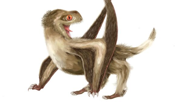 Так выглядел птерозавр, найденный во Внутренней Монголии