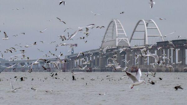 Птицы рядом с мостом через Керченский пролив