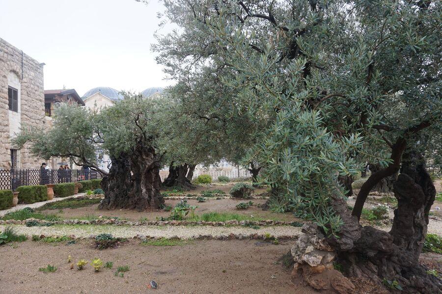 Иерусалим, Гефсиманский сад