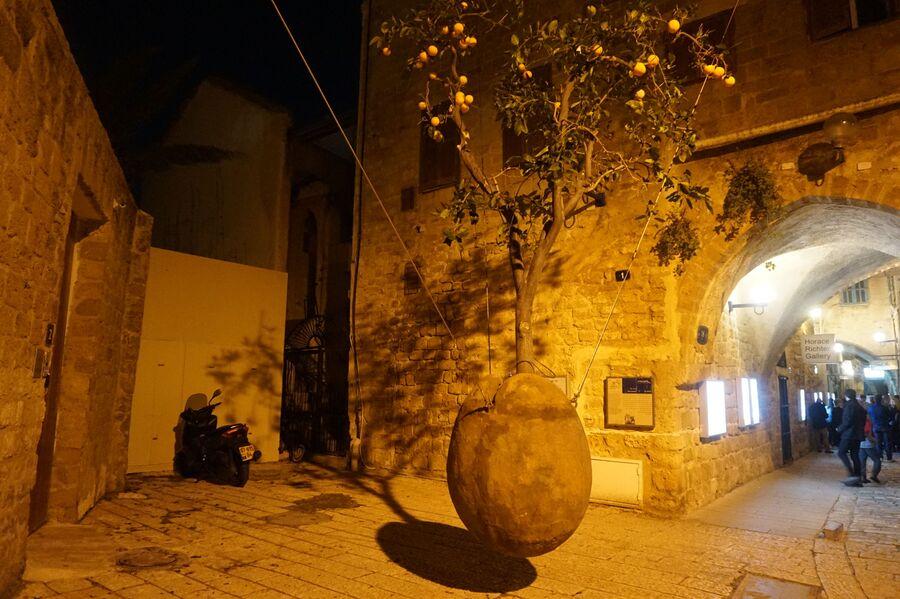 Апельсиновое дерево — символ Яффо