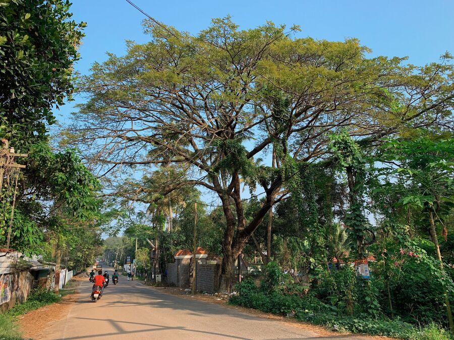 Керала, Индия