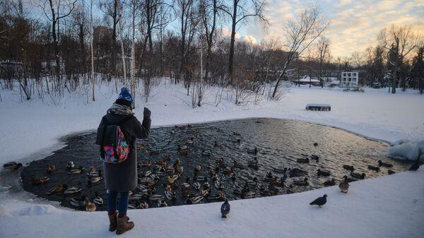 Девушка кормит птиц в Центральном парке культуры и отдыха имени Горького в Москве.