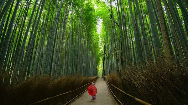 Бамбуковый лес в Киото, Япония