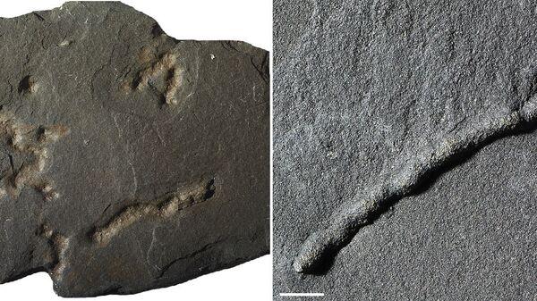Окаменелые остатки и следы первых многоклеточных существ, найденных в Габоне