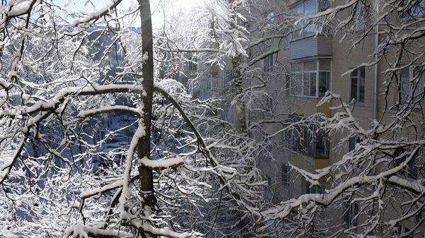 Заснеженные деревья во дворе на Ленинском проспекте в Москве