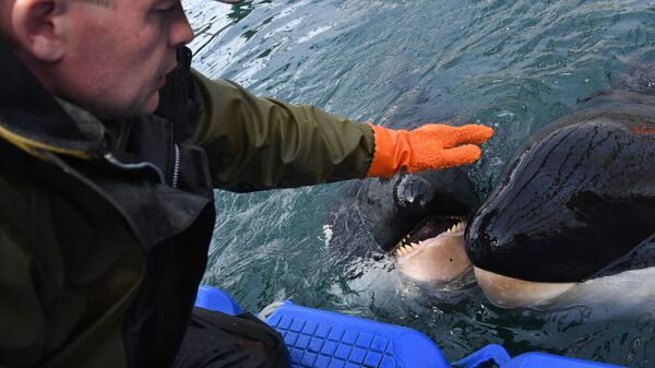 Центр адаптации морских животных в бухте Средняя Приморского края. Архивное фото