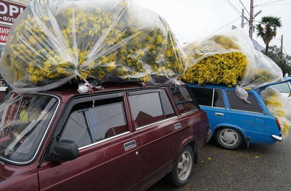 Продажа мимозы на улице Урожайной в Сочи