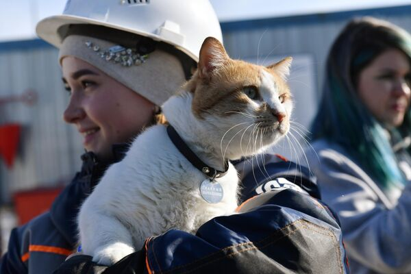 Кот по кличке Мостик на руках строителя Крымского моста