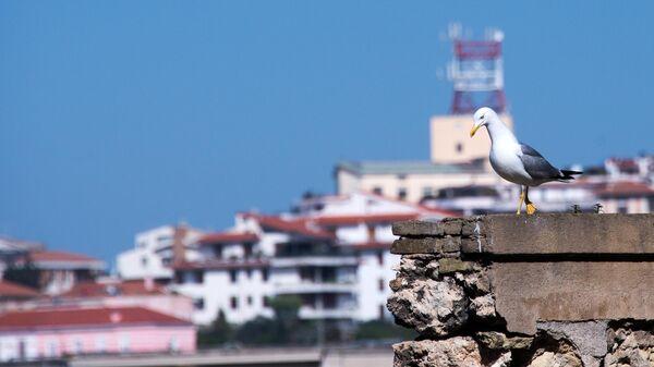 Чайка на набережной Кальяри (Сардиния)