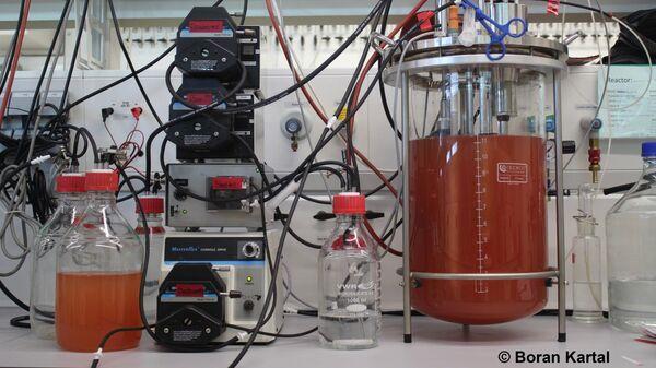 Емкости с бактериями, способными переваривать моноокись азота