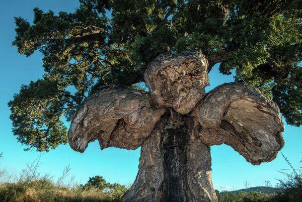 Дерево-птица, Франция