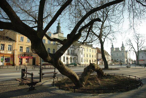 Дерево, преклонившее колени, Польша