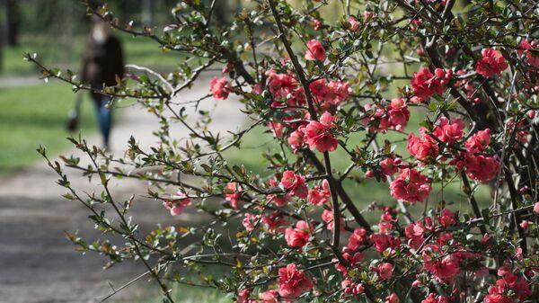 Цветущий куст в Ботаническом саду в Крыму
