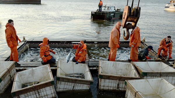 Массовый лов красной рыбы на побережье Берингова моря в Анадыре