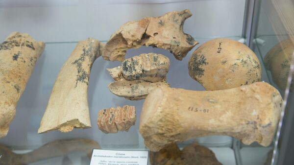Останки древних животных, обнаруженные в пещере при строительстве федеральной трассы Таврида