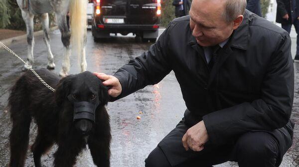 Президент РФ Владимир Путин с подаренной президентом Киргизии Сооронбаем Жээнбековым собакой породы тайган по кличке Шерхан в Бишкеке. 28 марта 2019