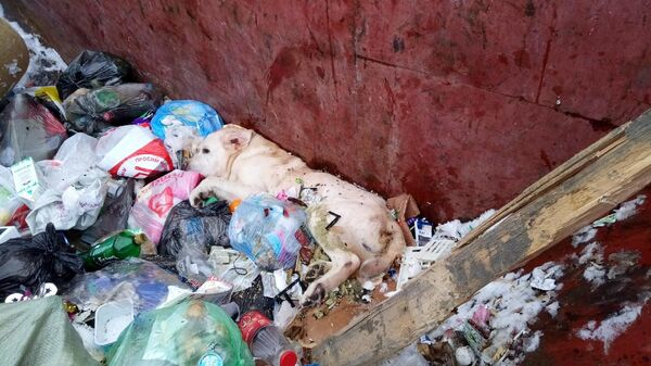 Пес в мусорном баке