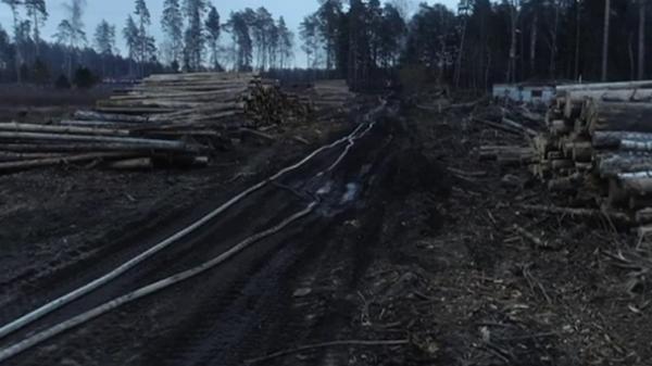 Опубликовано видео последствий пожара в нацпарке Лосиный остров в Москве