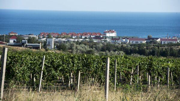 Виноградники в поселке Коктебель в Крыму