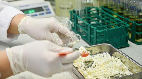 Исследование творога в лаборатории Центра гигиены и эпидемиологии