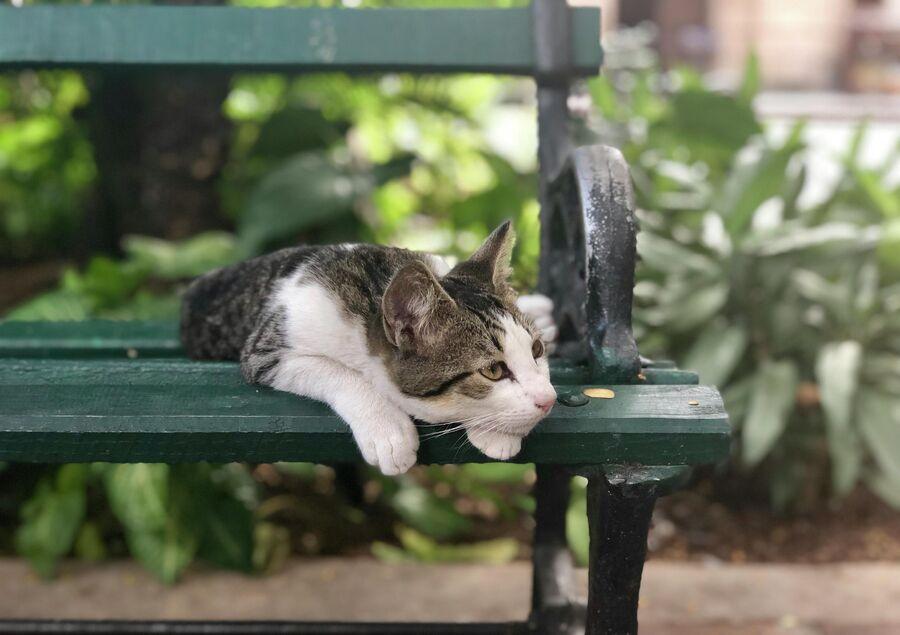 Кошка, Гавана, Куба