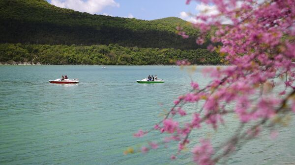 Цветущая сакура на берегу озера Абрау в Краснодарском крае