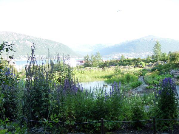 Арктическо-альпийский ботанический сад