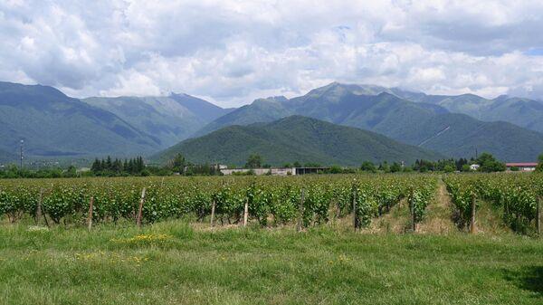 В АКРА рассказали о доле России в грузинском экспорте напитков и овощей