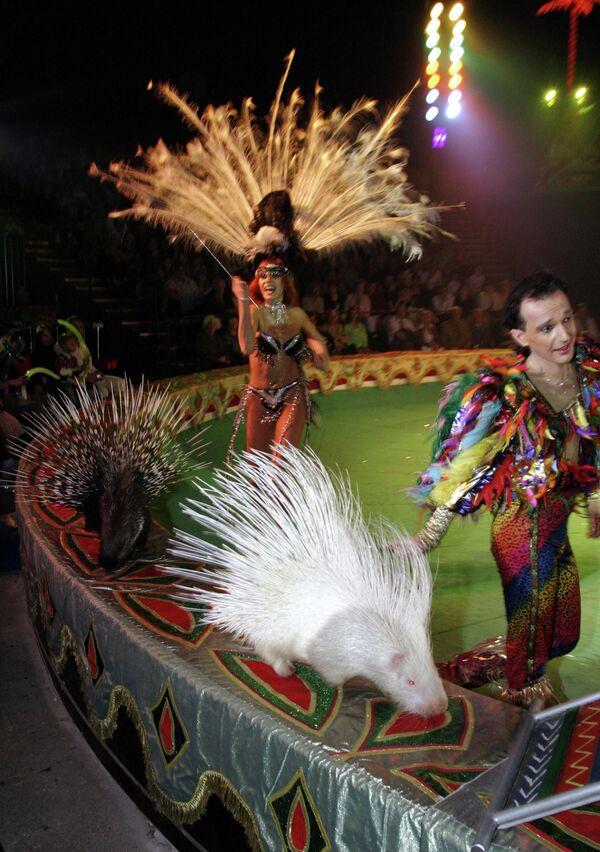 Новая программа в цирке Радуга. Дикобраз-альбинос.