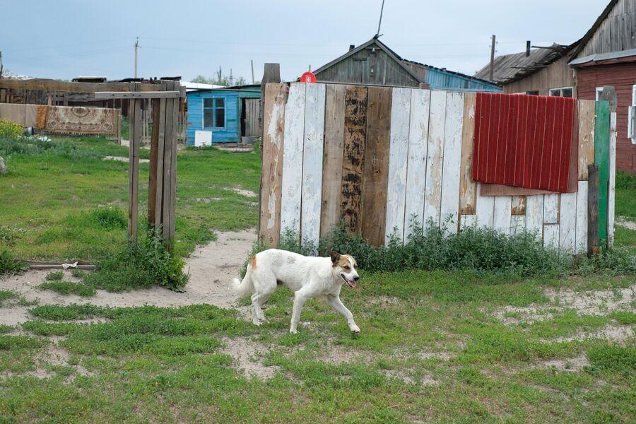 По оставленному цыганами поселку бегают собаки
