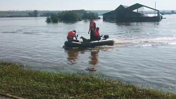Сотрудники МЧС эвакуируют собак из зоны паводка в городе Тулуне.  30 июня 2019