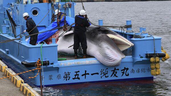 Рабочие готовятся к разгрузке пойманного малого полосатика после открытия коммерческого китобойного промысла в порту в Кусиро, префектура Хоккайдо, Япония