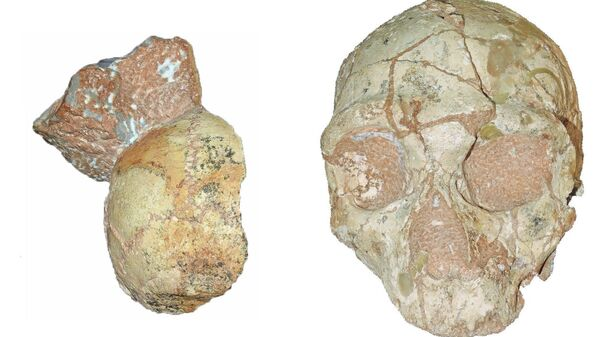 Фрагмент черепа неандертальца (справа) и кроманьонца (слева) возрастом в 210 тысяч лет